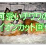 可愛いチワワのライオンカットを画像でチェックしてみよう!