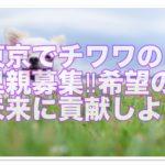 チワワの里親募集中‼︎東京で希望の未来のために貢献しよう☆