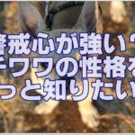 警戒心が強い?小さな勇者チワワ☆の性格をもっと知りたい!