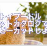 トイプードルの子犬はカットカタログでパピーカットしよう!!