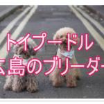 広島で信頼できるトイプードルのブリーダーを見つけたよ!!