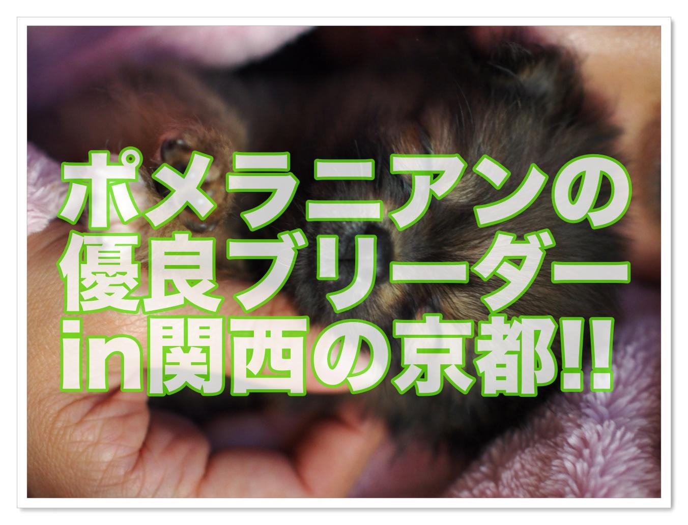 譲り 京都 無料 子犬 ます