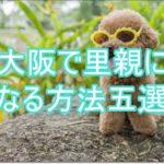 命を救え!大阪の無料でトイプードルの里親になる方法五選