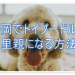 静岡で命の期限を迫られたトイプードルの里親になるには