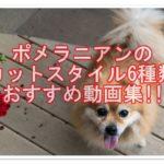 可愛すぎる☆ポメラニアンのカット6種類!!癒される動画集♪