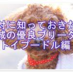茨城の本当におすすめしたいトイプードル専門ブリーダー!!