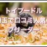 埼玉の口コミで人気のブリーダー!!トイプードルと出会おう