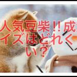 大人気な希少犬種‼︎豆柴の成犬体重やサイズ感はどれくらい⁇