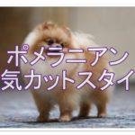ポメラニアンのカットスタイルカタログ☆あなたのお好みは??