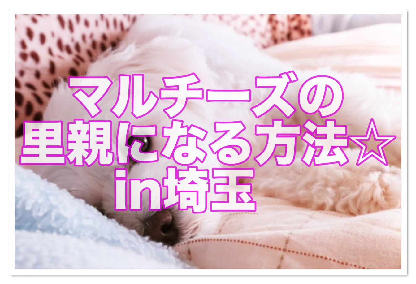 譲り ます 無料 埼玉 子犬
