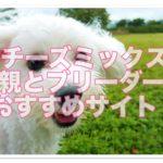 マルチーズミックス犬10選!里親やブリーダーサイトもご紹介!
