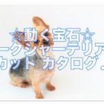 動く宝石ヨークシャーテリア!魅力を引き出すカットカタログ!