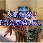 あの豆柴とすぐ触れ合える!!東京で話題の超人気豆柴カフェ♪