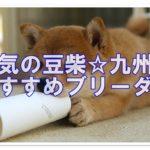 大人気の豆柴☆信頼できるブリーダーは九州にもいたんです♪