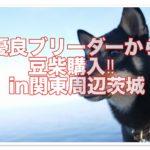 豆柴トラブル多発?!優良ブリーダーで購入し解決☆in関東茨城