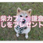 豆柴カフェ!鎌倉小町通りでみんなに笑顔と癒しをプレゼント!