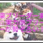 安心安全に子犬を迎えられる!とっておき東海地方の豆柴専門犬舎とは?