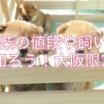 かわいい豆柴を飼う前に値段や飼い方を知ろう☆大阪限定で‼︎