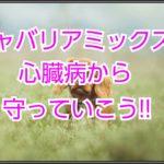 キャバリアミックス犬☆心臓病から長寿へみちびく対策を紹介