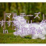 人気のマルチーズ☆おすすめのブリーダーを北海道で探そう!!