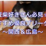 関西&広島ではココ!!かわいい豆柴のおすすめブリーダー♪