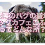パグに癒される☆パグカフェ大阪!パグの聖地「こふみ」とは?