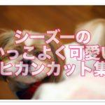シーズーカット♪かっこいいモヒカンスタイル画像・動画集♪