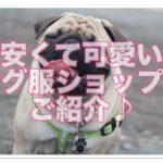 愛犬にパグ服を見つけたい!!安い・可愛いショップのご紹介♪