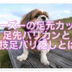 画像あり♪シーズーカット足先バリカンと秘技!!足バリ隠し☆