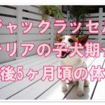 ジャックラッセルテリアの子犬期☆5ヶ月頃の平均体重とは?!