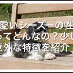 可愛いシーズーの性格ってどんなの??少し意外な特徴を紹介!!
