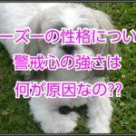 シーズーの性格について☆警戒心が強いのは何が原因なのか??