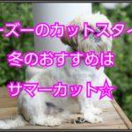 シーズーのカットについて☆冬の時期もサマーカットが良い!!