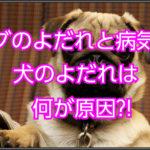 パグのよだれと病気の関係☆犬のよだれの原因を見極めよう☆