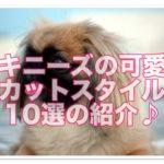 ペキニーズカットスタイル10選!!かわいい画像盛りだくさん!!