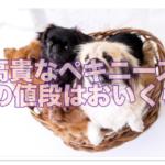 高貴なペキニーズはカラーが多い☆大人気の黒の値段が○○!?