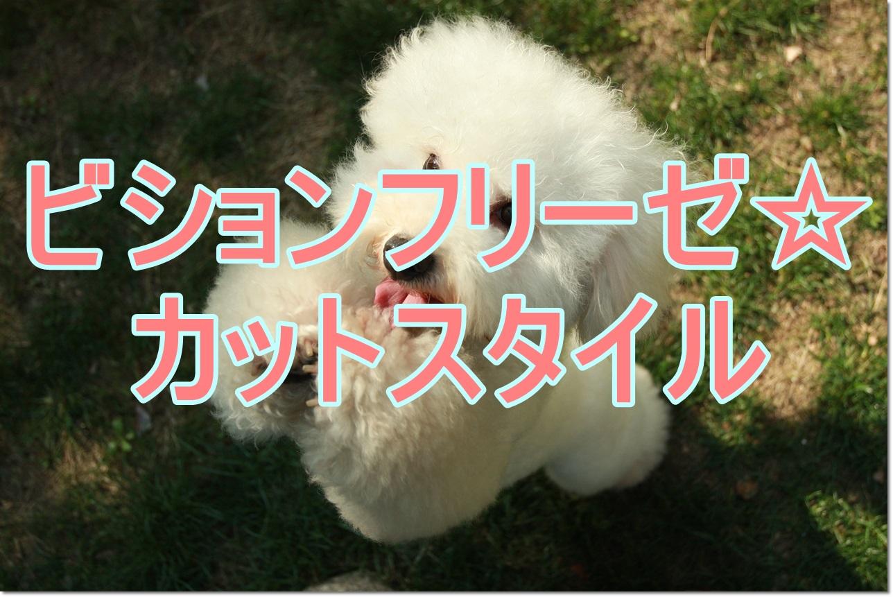 ビションフリーゼ☆定番カットから個性的スタイルまでを紹介