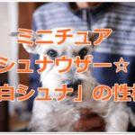 ミニチュアシュナウザー☆ホワイトカラー「白シュナ」の性格