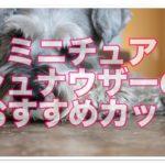 ミニチュアシュナウザーかわいいカット集!人気スタイル16選!