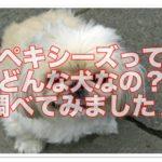 ペキニーズ&シーズーのミックス犬「ペキシーズ」が可愛い!!