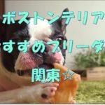 関東のおすすめ☆ボストンテリアブリーダーをご紹介します!!