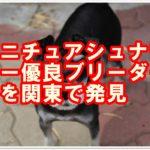 ミニチュアシュナウザー!優良ブリーダーを関東で発見!東京版