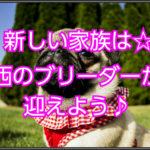 パグのお迎えはブリーダーから☆関西の優良ブリーダーを紹介