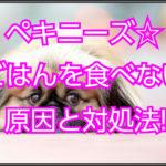 ペキニーズ生後4ヶ月の体重管理☆食事をしない原因と改善法!