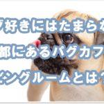 大人気パグカフェ!!京都にある『リビングルーム』を大調査!!