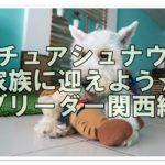 ミニチュアシュナウザー家族に迎えよう☆ブリーダー関西編