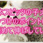 日本スピッツの子犬のしつけ☆褒めて伸ばすしつけ方が重要!!