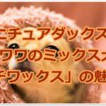 ミニチュアダックスとチワワのミックス「チワックス」の魅力