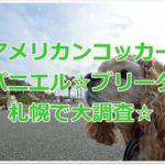 アメリカンコッカースパニエル☆ブリーダーを札幌で大調査☆