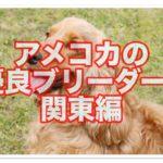 アメリカンコッカースパニエルの優良ブリーダー紹介!!関東編